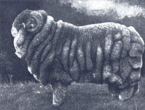 1-SheepPunk